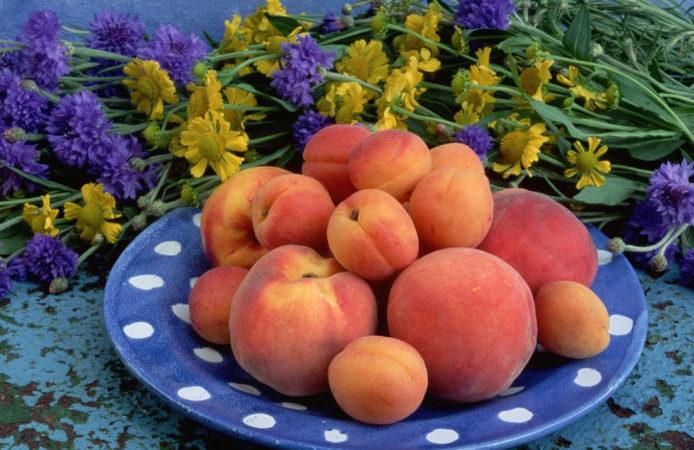 Отличия персика от абрикоса