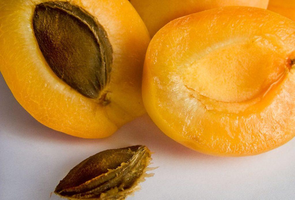 Описание сорта абрикоса Шалах