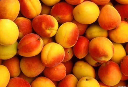 Сорта абрикосов на Урале