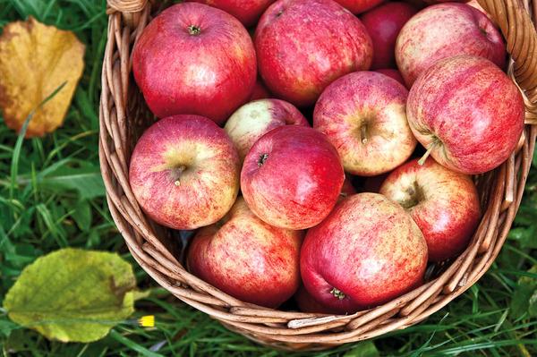 яблоки Штрейфлинг