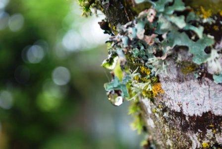 Описание болезней плодовых деревьев