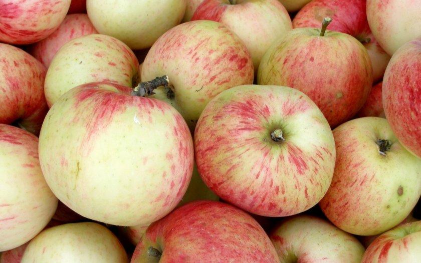 Как выглядлит яблоня Коричное полосатое