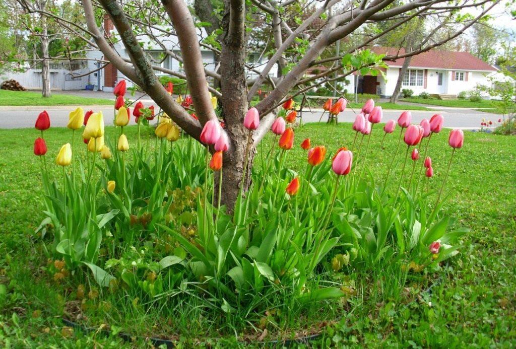 что можно посадить под яблоней из цветов