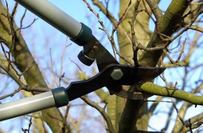 Формирование кроны персика и ее обрезка