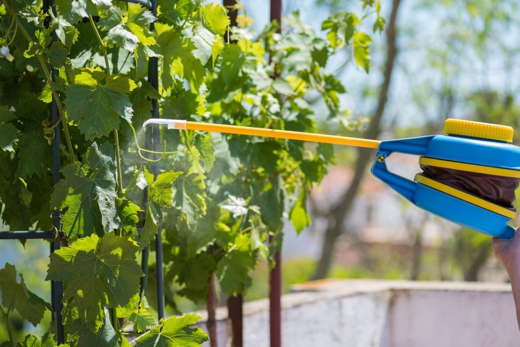 Кабрио топ для винограда фунгицид