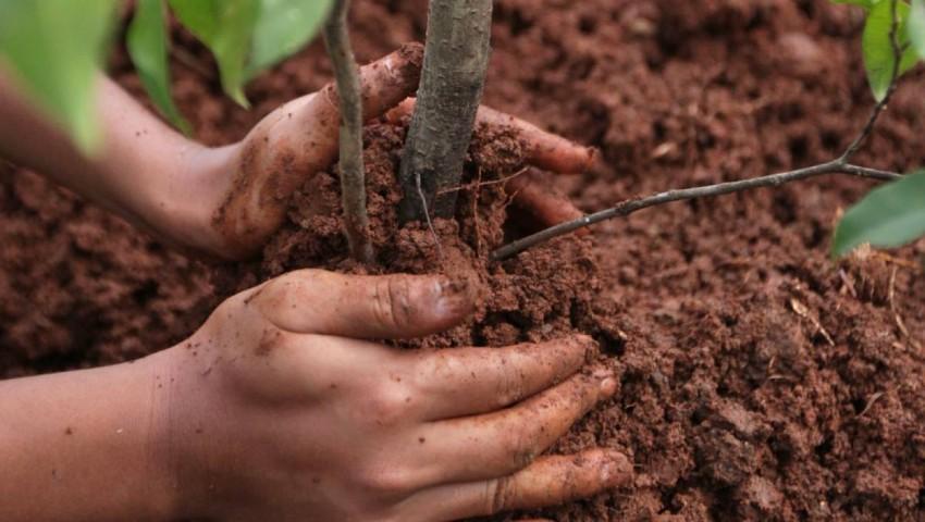 чем удобрять вишню для лучшего урожая