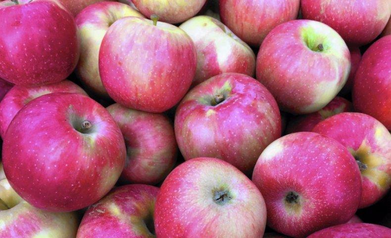 сорт яблони флорина