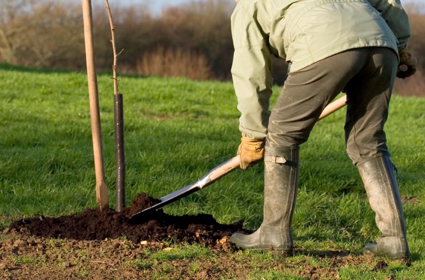 какие удобрения вносить весной под яблони