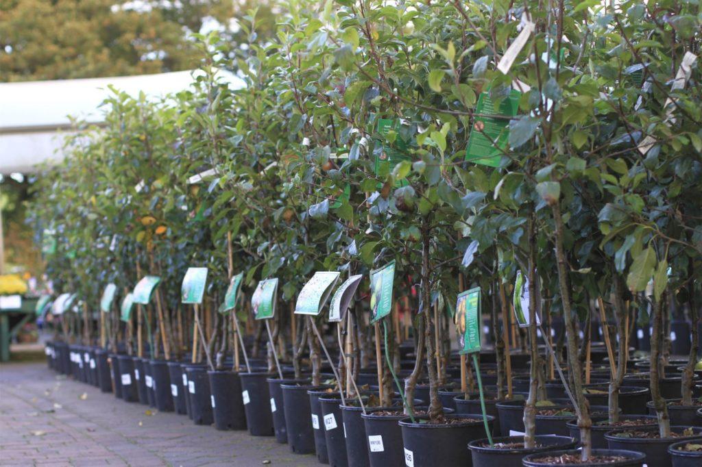 Правила посадки яблоневого дерева