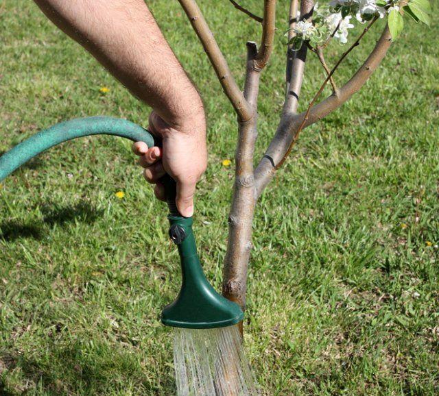 барбара деревья при поливе картинки элементы кружева