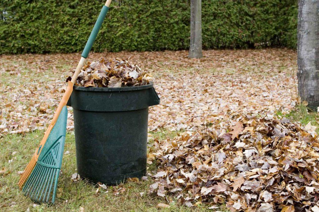 сбор листвы