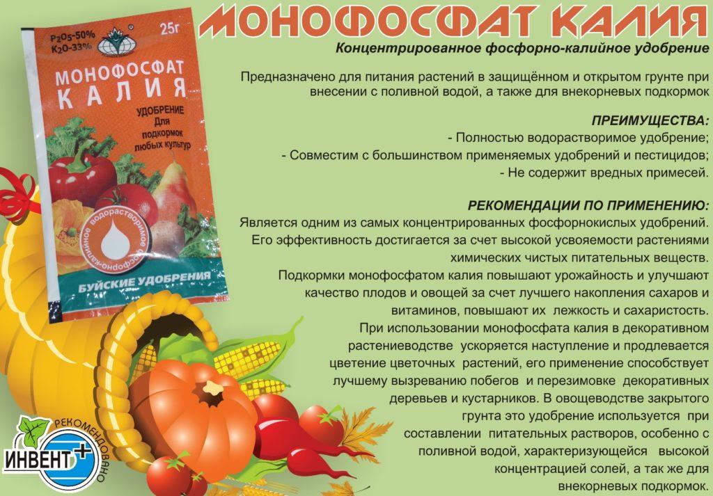 Уход за клубникой при плодоношении