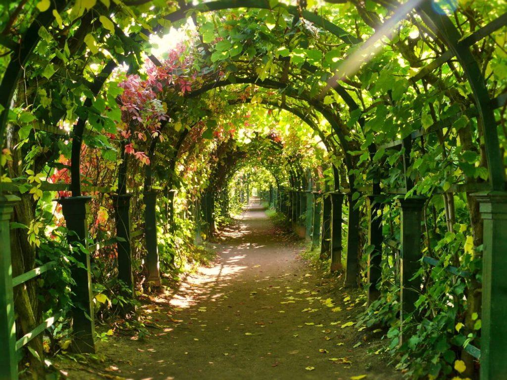 виноградные арки фотогалерея вообще