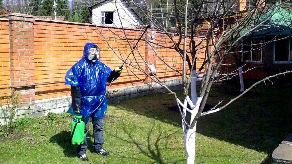Как опрыскивать плодовые деревья и кустарники весной