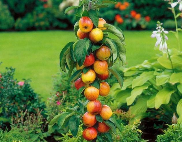 Какие сорта колоновидных деревьев посадить в саду