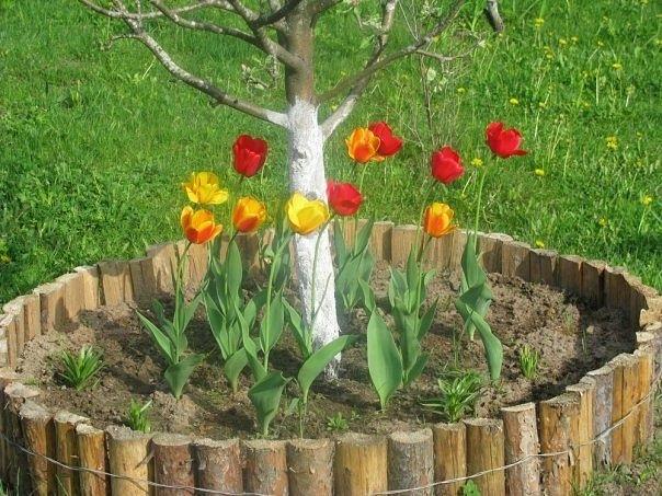 Оформление приствольных кругов деревьев