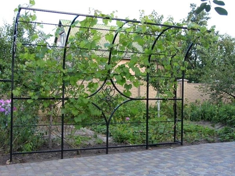 Как винограду сделать опору частный дом фото
