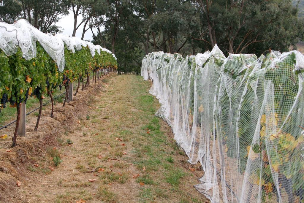Уход за плодовыми деревьями
