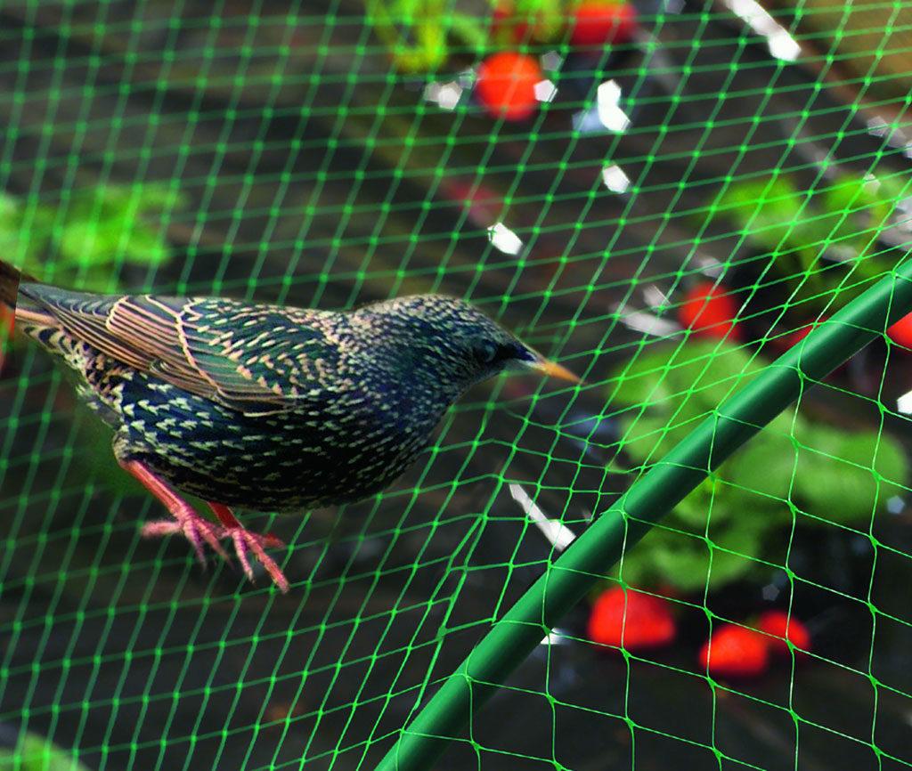 Защита клубничной грядки от птиц