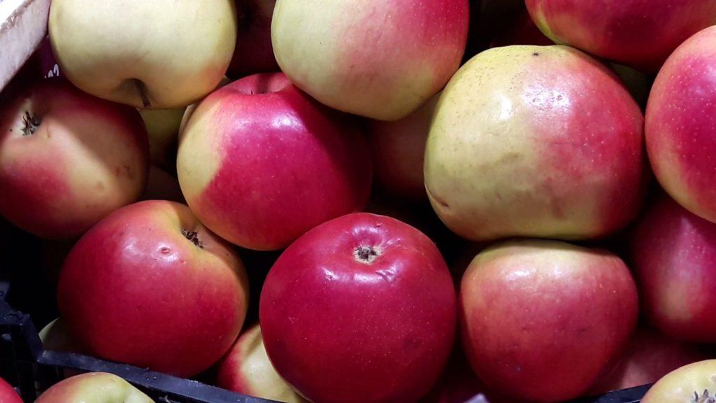 Описание сорта яблони Лигол