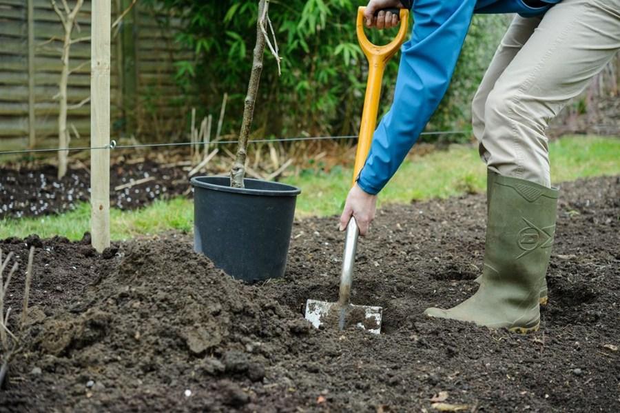 Как посадить яблоню Лигол