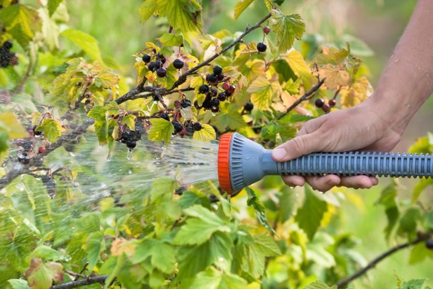 Как подкормить виноград осенью и весной