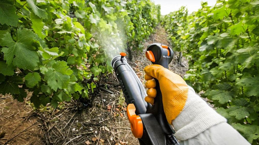 Защищата винограда от вредителей и болезней