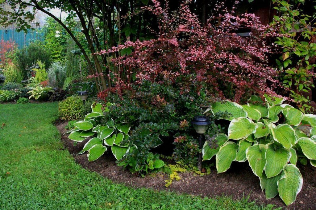 Барбарис в композиции с другими растениями фото