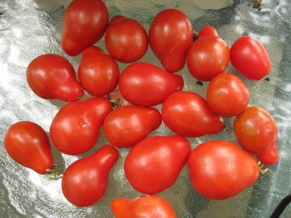 розовые сорта томатов отзывы