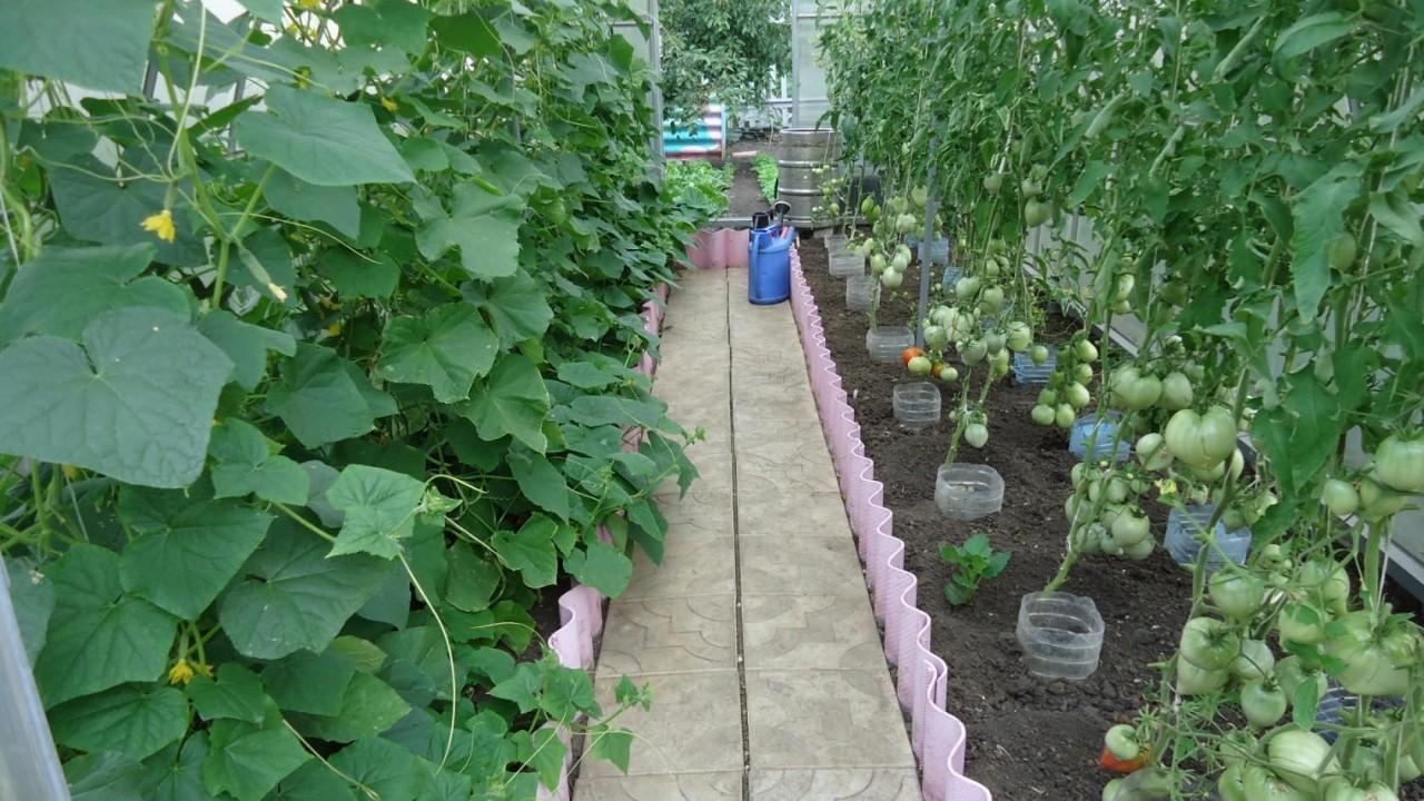 как поливать мочевиной помидоры и огурцы перец