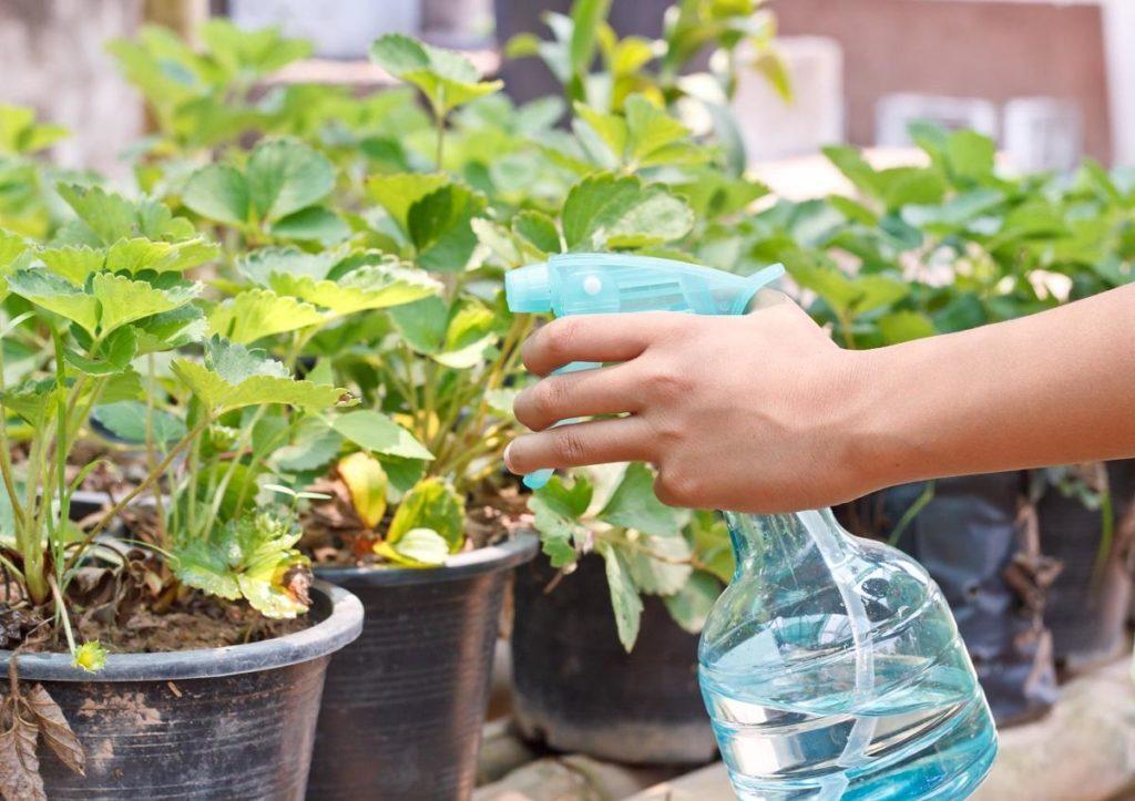 Гербициды для клубники от сорняков