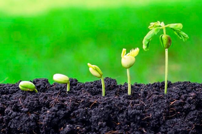 Проращивания семян