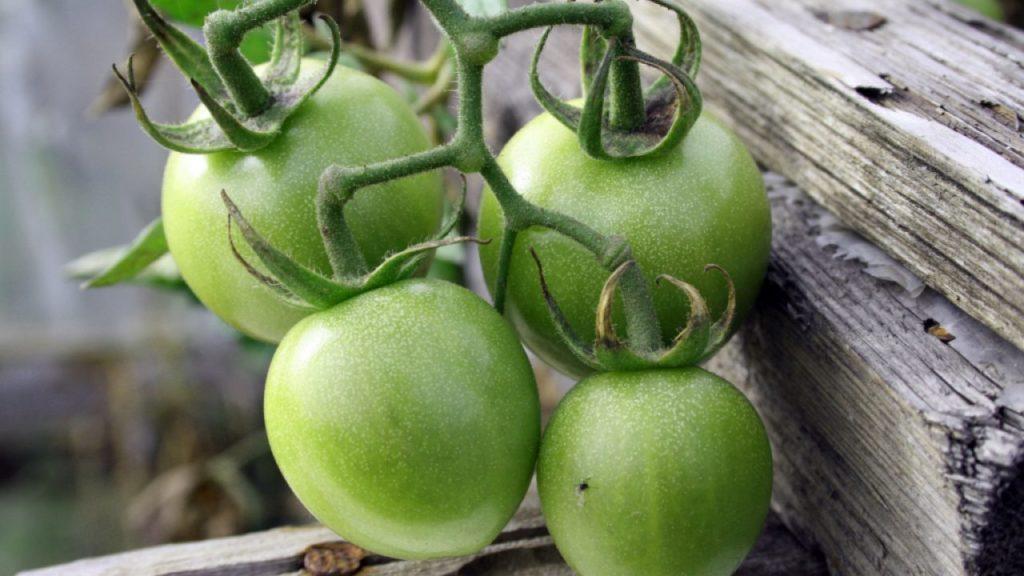 Сорта зеленых томатов и рецепты приготовления