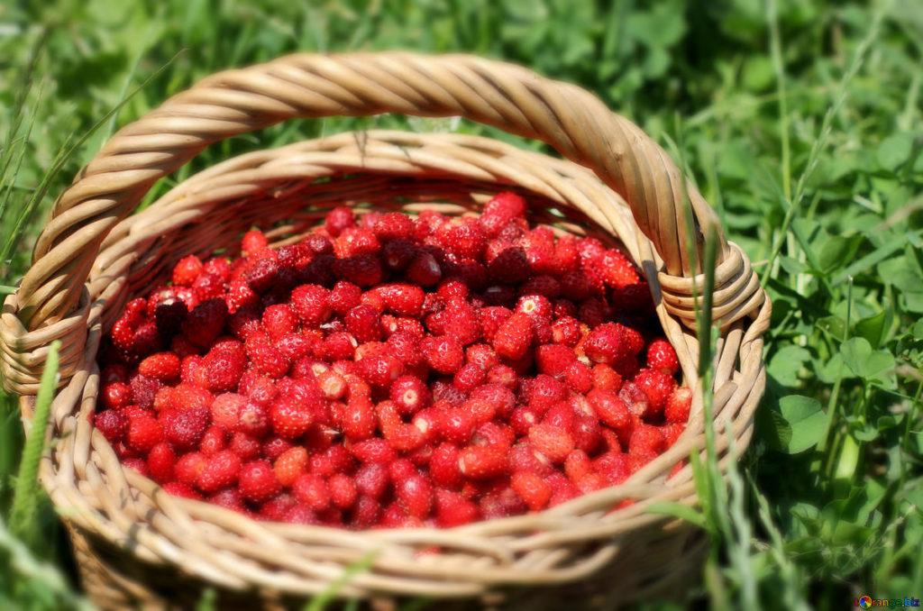 Земляника Али-Баба: описание и выращивание