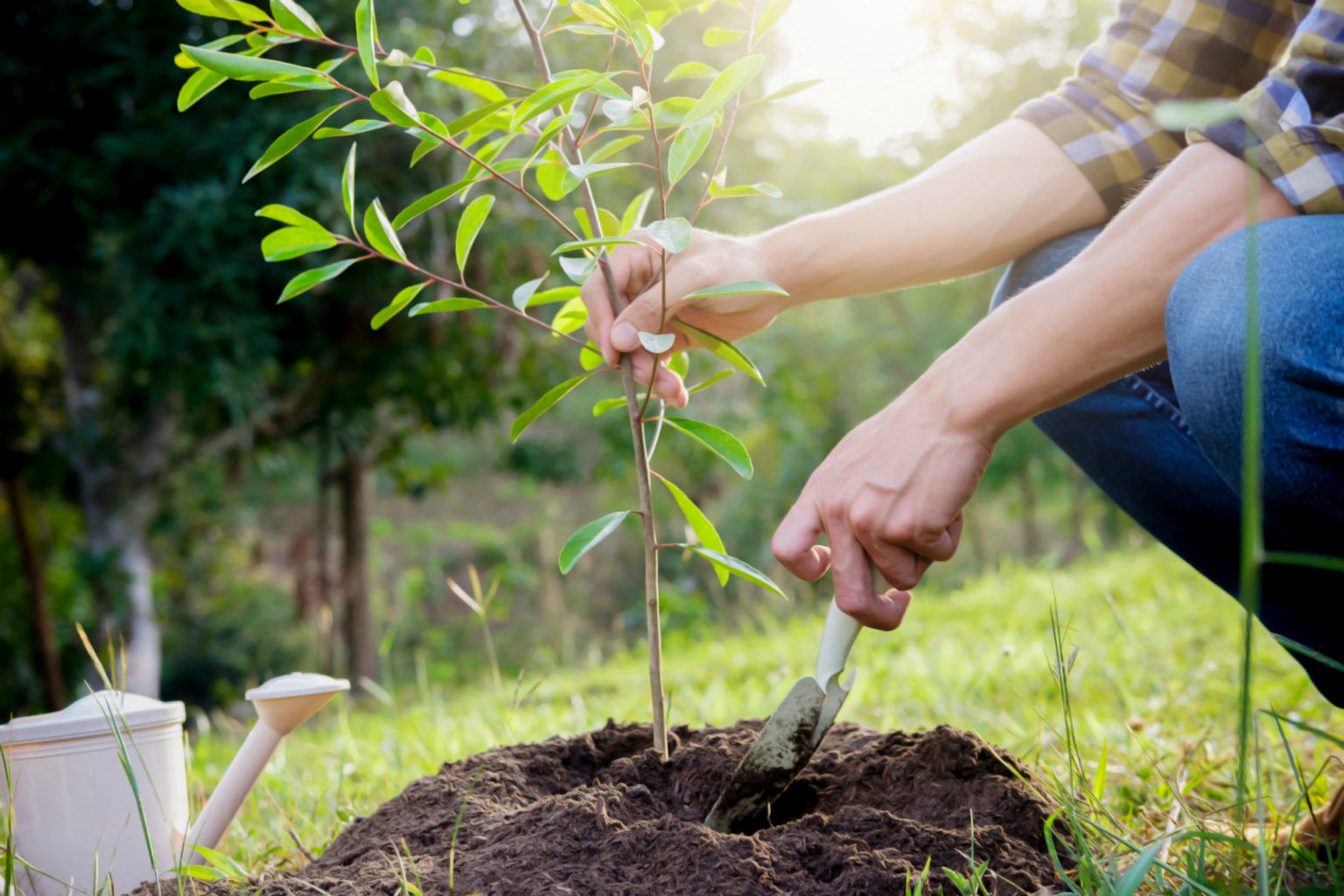 Поливать деревья картинки